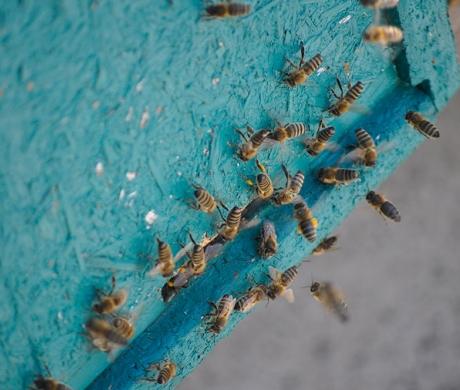 Pneumatyczne pszczoły
